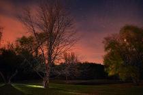 Illuminated Night von Joel Gafford