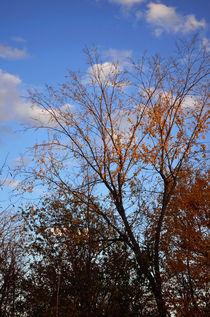 Autumn Reach von Joel Gafford
