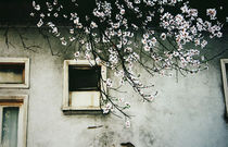 Finding Beauty In Negative Spaces Pt.III by Iskrenna Panayotova