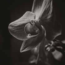 Orchid II by Lina Gavenaite