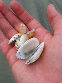 Sea Shells  von brookelynn-goodrich