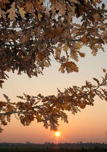 Sonnenuntergang in Berlin von Egon Rathke