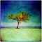 Ancon-tree-1200