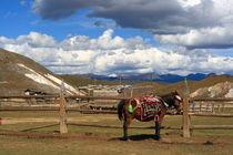 Meadow & Mule (Shangeri-La, YunNan, China) von ShuiZhou He