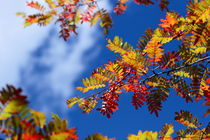 Leaf & Sky (Shangeri-La, YunNan, China) by ShuiZhou He
