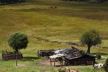 Rangeland (Shangeri-La, YunNan, China) by ShuiZhou He