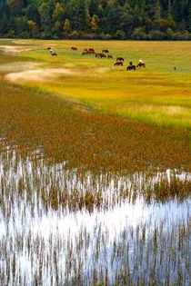 Colorful Meadow (Shangeri-La, YunNan, China) by ShuiZhou He