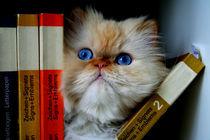 Kluge Katze von Peter  Nimsch