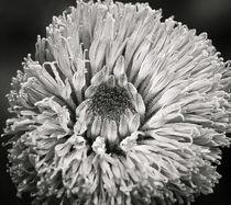 Fractal vegetal 4 von Juan Carlos Lopez