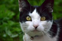 Kitty by Nick Flegg