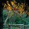 277-af-autumn-000378-002-rv-2-brshv-3-v-13