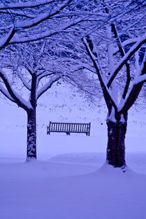 Bench for All Seasons 347 by Patrick O'Leary