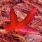 359-af-fall-carpet-971634-001-v-19