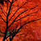 361af-autumn-shade-961045-001-rv-2-1brshv-6-v-24