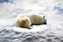 Eisbär by Werner Dreblow