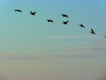 Flug der Wildgänse von Eva-Maria Steger