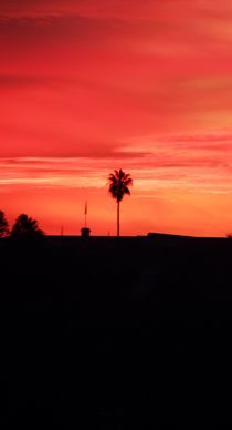 Sunset and palms by Eva-Maria Steger