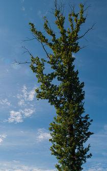 Tall Tree by safaribears
