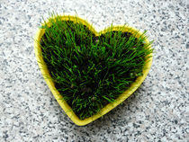 Grass heart by maudke