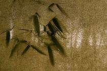 Bamboo & Shade von Benjamin Wilkinson