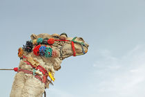 Camel by Reem Elsheikh