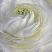 blütenweiß - white as snow von augenwerk