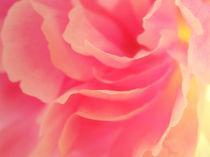 blütenwirbel - curling blossom von augenwerk
