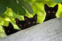 Cats von A. Mucahid Oral