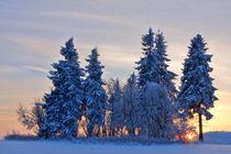 Sonnenuntergang im Winterwald von Wolfgang Dufner