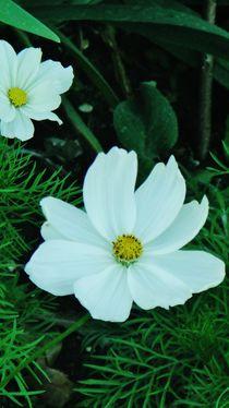 Flowery Snowflake by wastdyuth