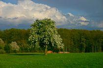 Frühling im Soonwald von rheo