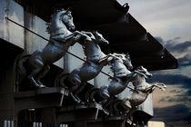Horses by Rania chalfoun