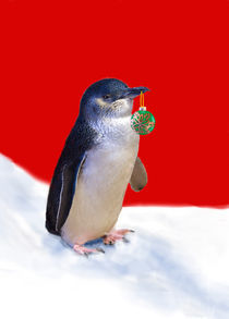 Fairy Penguin at Christmas by Louise Heusinkveld