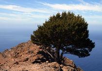 La Gomera - Fels - Baum von Jens Berger