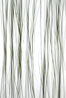 Linien by Ive Völker