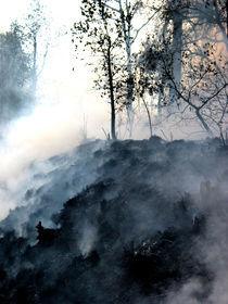 bosque ahumado Geräucherte Wald by Ricardo Anderson