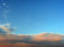 pajaros volando  Vögel by Ricardo Anderson