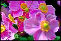 Japanese flower by Maks Erlikh