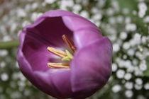 Tulip von Yvonne Hamilton