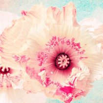 Pastell poppy von AD DESIGN Photo + PhotoArt