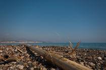 Strandgut von Tatjana Walter