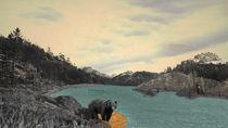 Animalia Canadiana; Ursus Americanus von Derek Dix