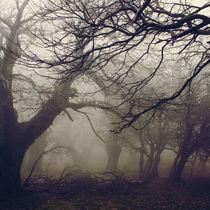 Walnut forest by Vangelis Bagiatis