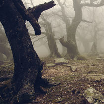 Walnut forest II by Vangelis Bagiatis