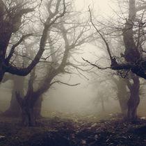 Walnut forest III by Vangelis Bagiatis
