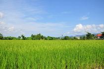 green and blue von huiwen chen