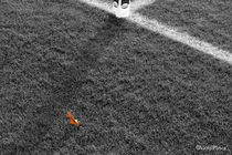 Rugby League Final by Viorel Plesca