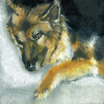 Dixson, a long haired Shepard by Alma  Lee