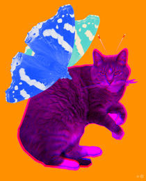 Flying-cat-pinie1-1e
