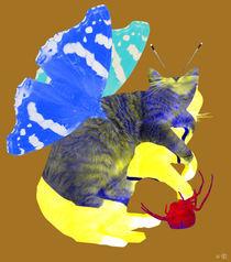 Flying-cat-pinie3